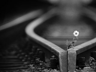 Flower in train tracks