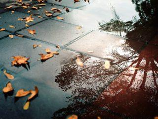 fallen leaves after rain