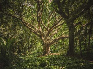 large tree in a lush forest